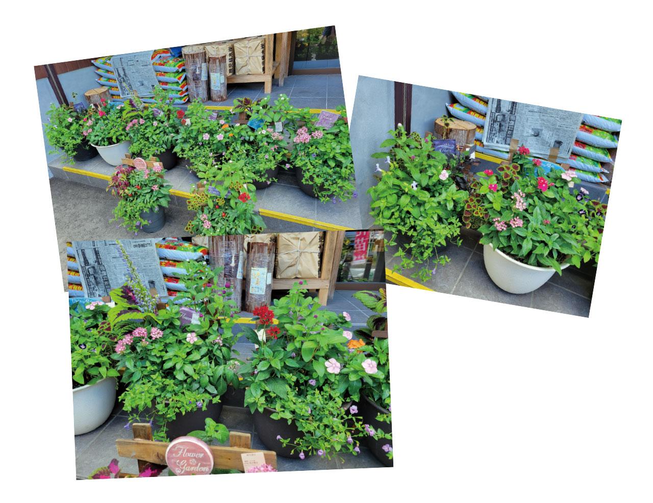 園芸コーナー『GreenGarden』の風景
